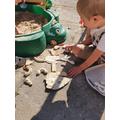 Dinosaur bones excavated carefully with a brush.