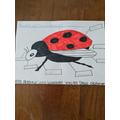 Harper labelled a ladybird.