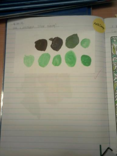 Year 1 - Mixing colours