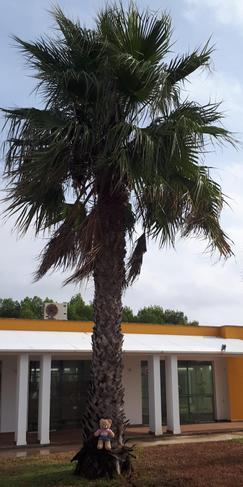 Bessie went to Menorca