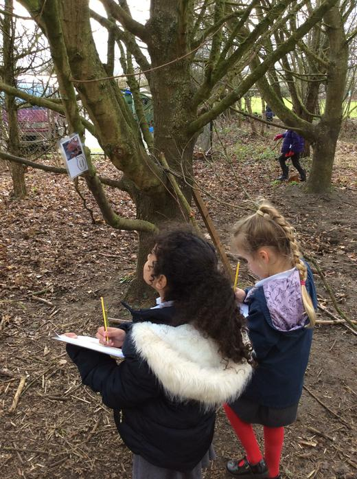 Looking for clues in out Winter Wood Treasure Hunt