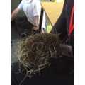 We had a visit from one of Mrs Stepp's hedgehogs.