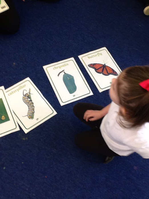 We sequenced the life cycle of a caterpilalr