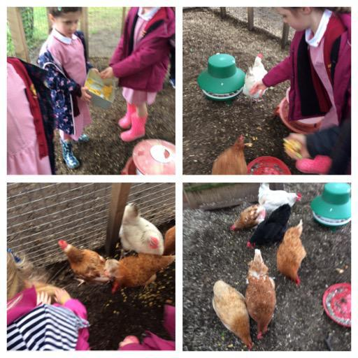 We love visiting the hens.