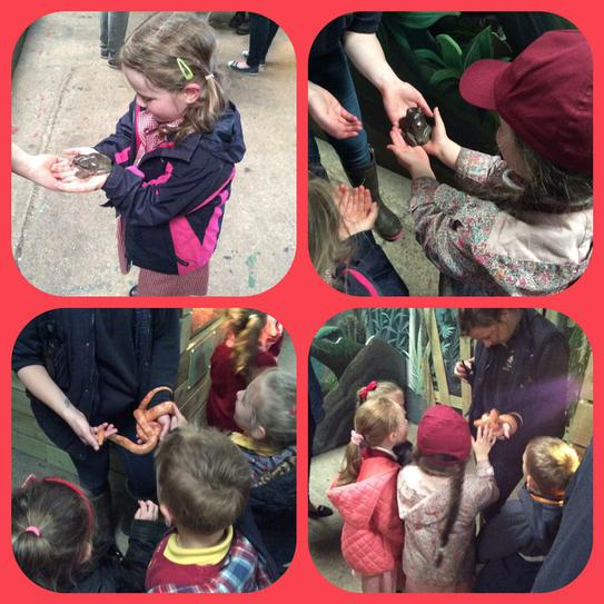Being brave and holding frogs and stroking snakes!