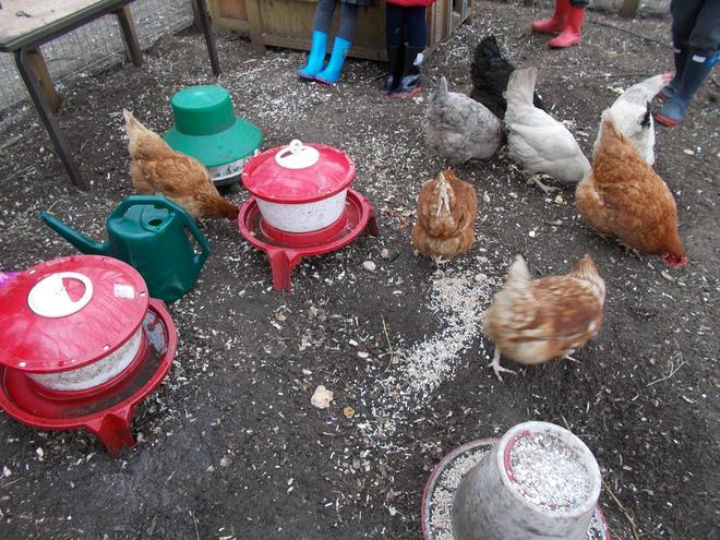 'Feeding time!'