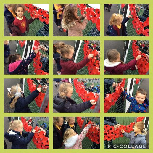 Putting our poppies up 2