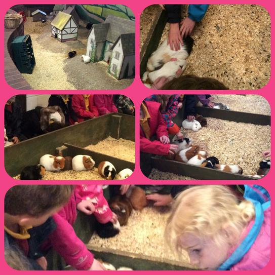 Stroking the Guinea pigs at Farmer Teds
