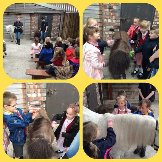 Grooming the ponies at Farmer Ted's!