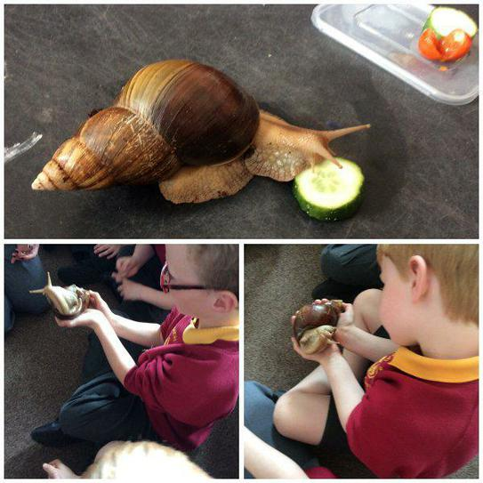 What a healthy eater Gary the snail is.