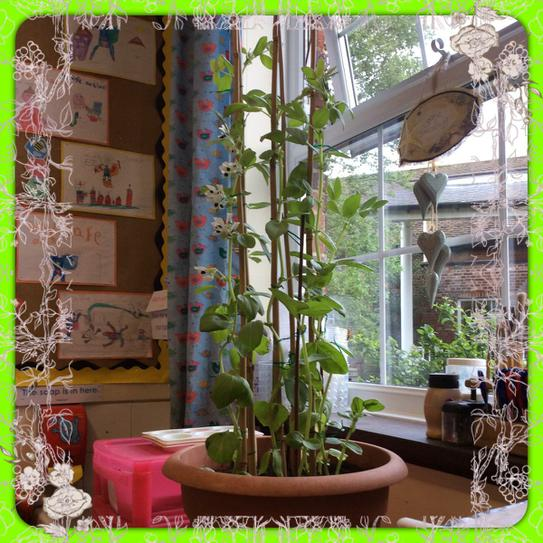 Will be get any beans on our huge beanstalk?