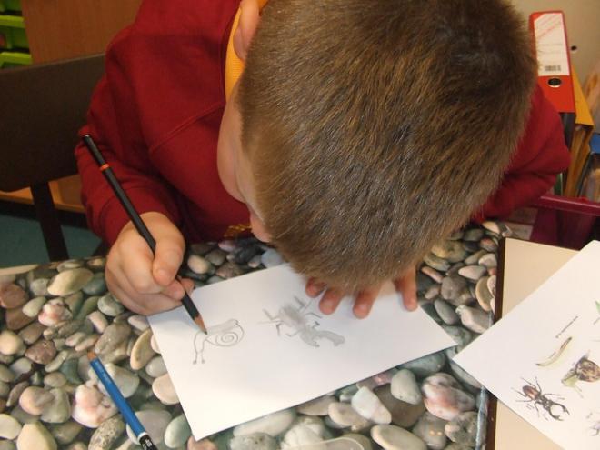 We enjoyed sketching minibeasts