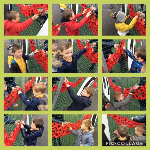 Putting our poppies up 1