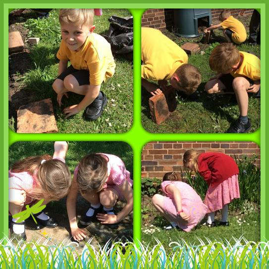 Searching for little creatures in our garden.