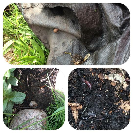 Exploring micro habitats in the school garden.