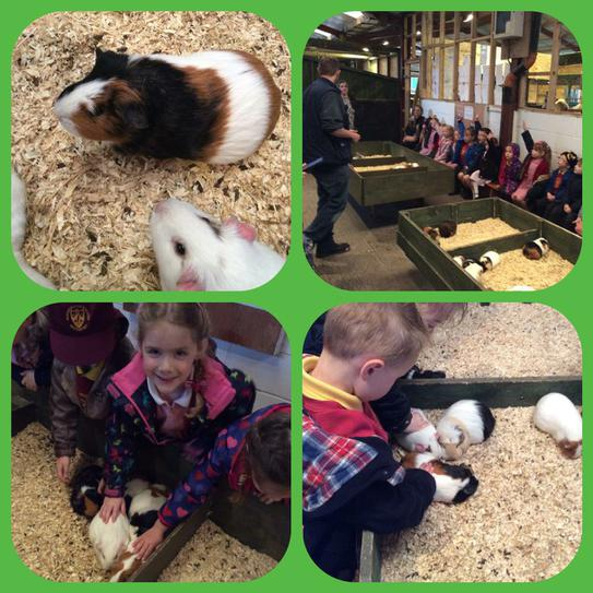 Look at our Guinea pig friends!