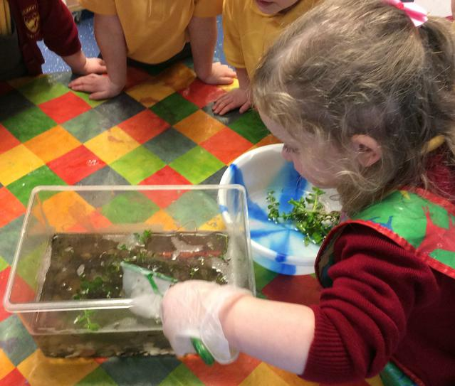 Caring for our tadpoles.