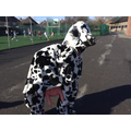 A cow on our Y5+6 playground - who could it be???