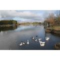River Trent  - Farndon