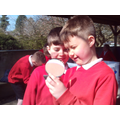 We examined each rock with a magnifying glass.