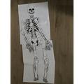 Zac's Skeleton