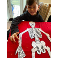 Oliver K's Skeleton
