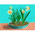 Here are daffodil buds and flowers.