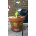 Shane's painted and planted pot design.