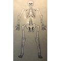 Vinnie's Skeleton