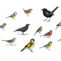 Which birds can you identify in your garden?