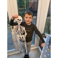 Noah's Skeleton