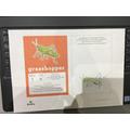 A lovely grasshopper!
