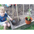 Seb has repotted his bean plant