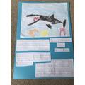 Zack's  Tiger Shark poster