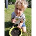 Seb planted sunflower seeds