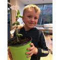 Harry's bean plant