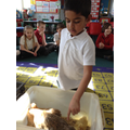We looked at chickens and their chicks.