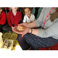 Mrs Wisson-Burton brought in some animals to show.
