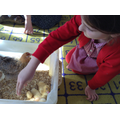 We stroked a duckling.