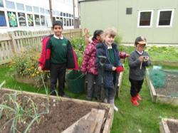 Year 3 digging potatoes - Oct 15 6