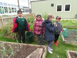 Year 3 digging potatoes - Oct 15 5