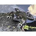 Close up frog