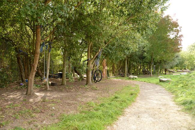 Tree edge and access path