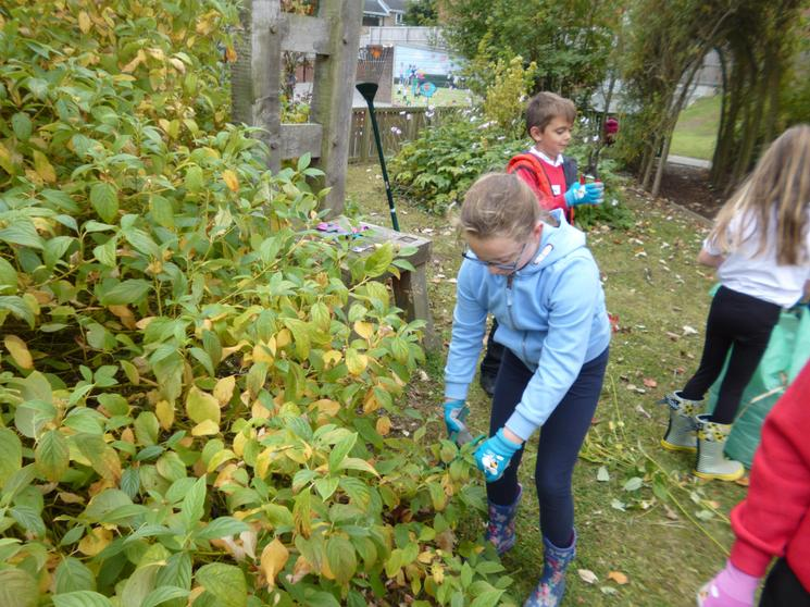 Pruning, weeding and tidying the Sensory Garden.
