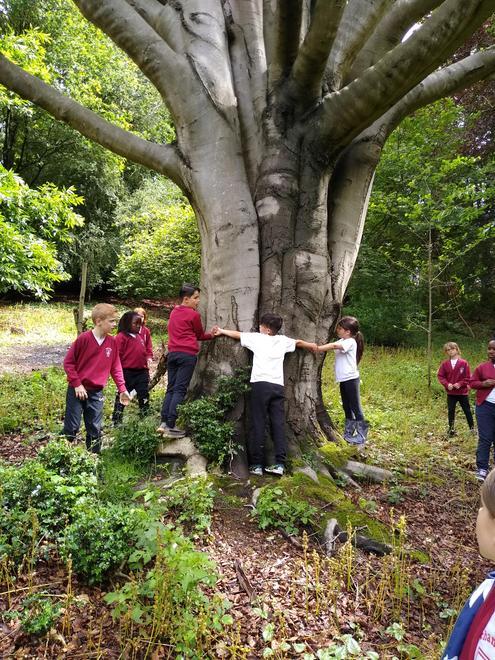 Broad leaf woodland