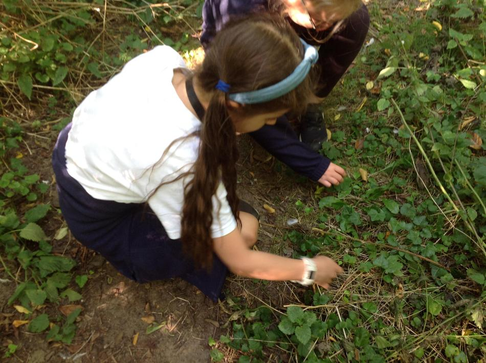 Eagerly hunting for bugs using good observation skills.