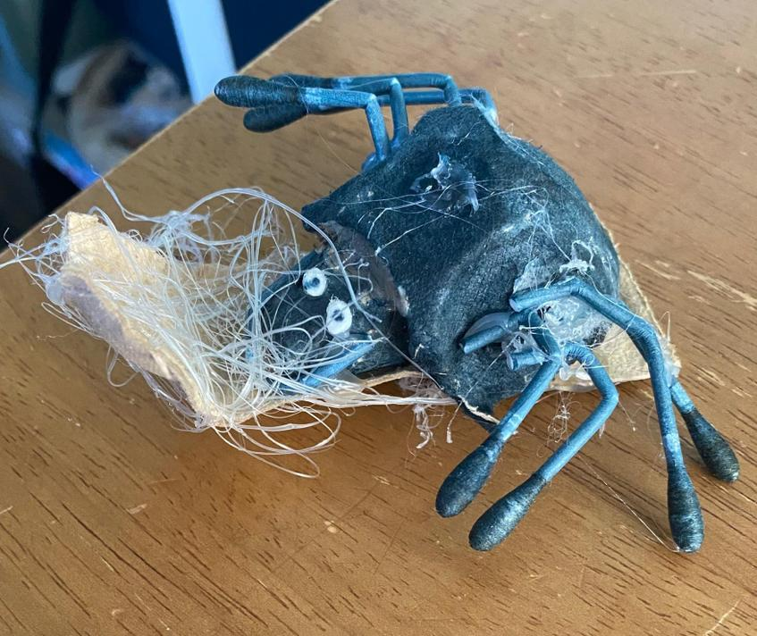 Jackson's spider with webs made by