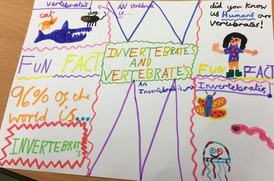 Designing information posters about vertebrates and invertebrates