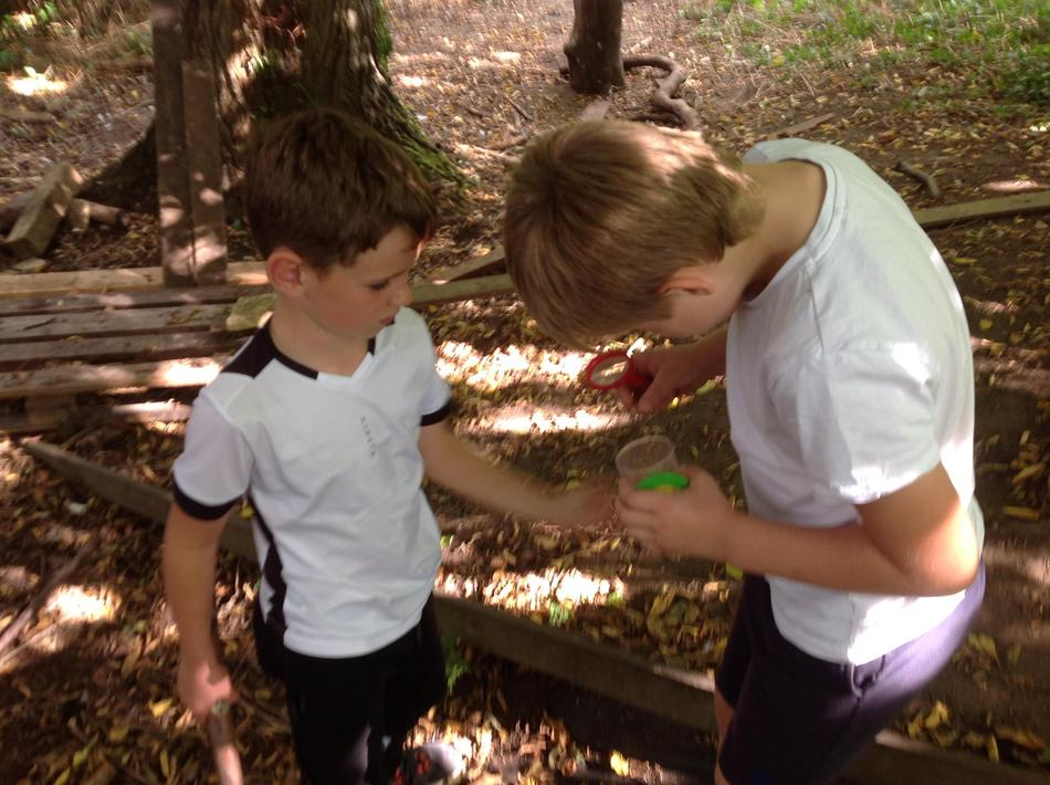 Collecting bugs in a pot, identifying them using a microscope and books for reference.
