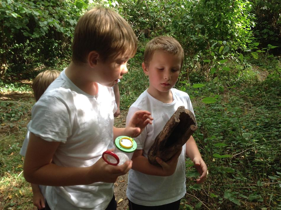 Discovering bugs on a log - looking carefully  at legs and different segments of the body.